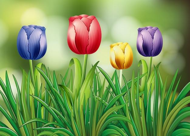 カラフルなチューリップの花の庭