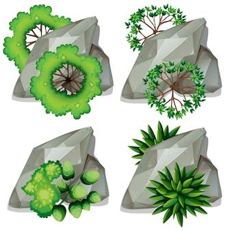 自然の岩と植物のセット