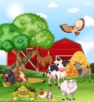農場で生きている農場の動物