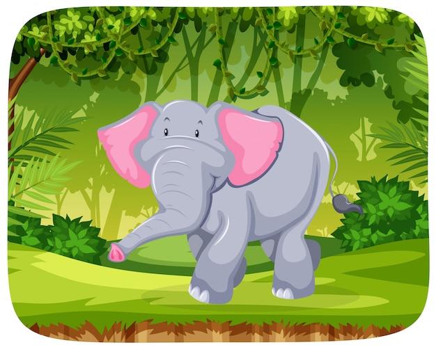 ジャングルの中で象