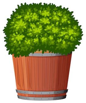 鍋に緑の植物