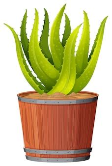 鍋にアロエベラの植物
