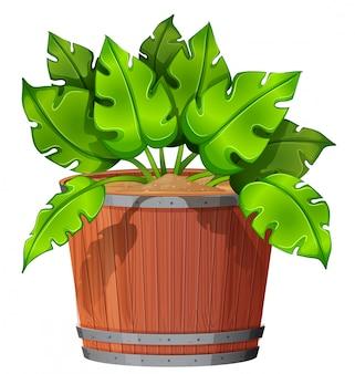 孤立した植物の鍋