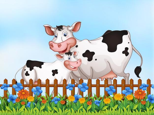 庭で牛の家族
