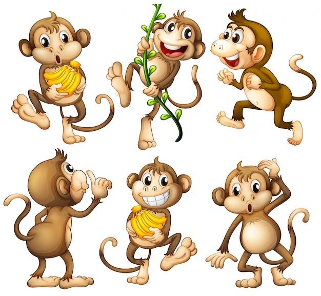 Игривые дикие обезьяны