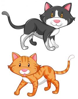 Две милые кошки на белом фоне