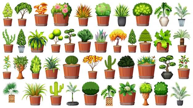 鍋の植物のセット