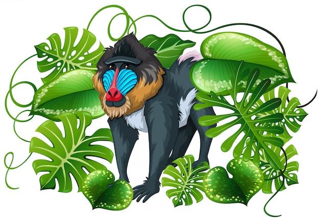 Павиан в зеленых листьях