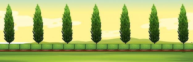 公園の松の木のある風景