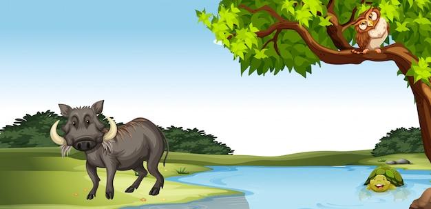 池のそばの野生動物