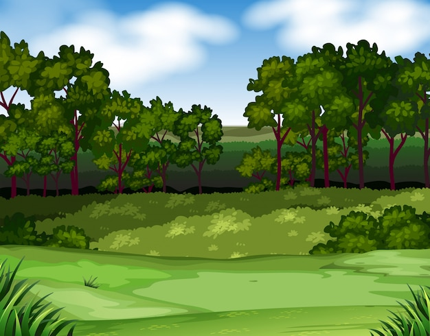 木とフィールドの背景を持つ森林シーン