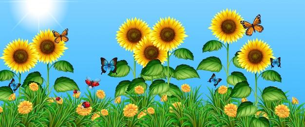 ひまわり畑を飛んでいる蝶