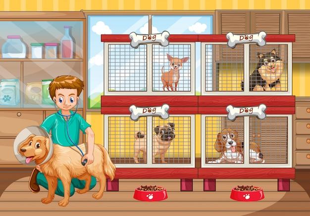 獣医が病院で多くの犬をチェック