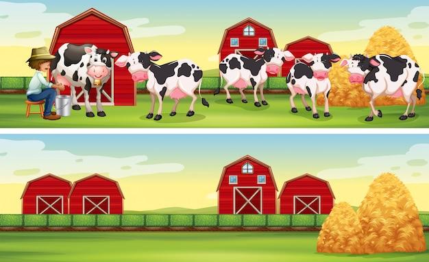Фермер и коровы на ферме
