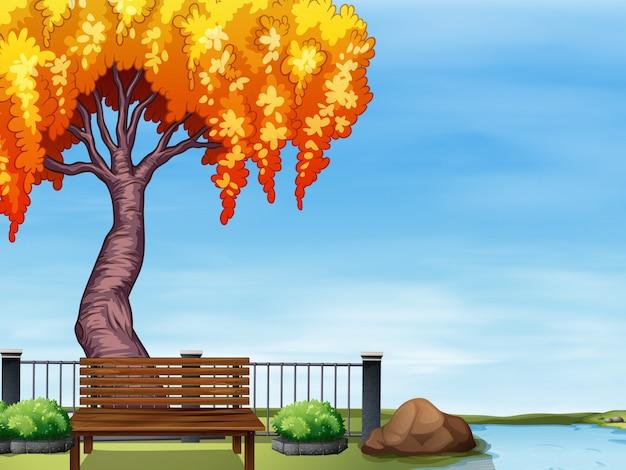 川沿いの柳の木