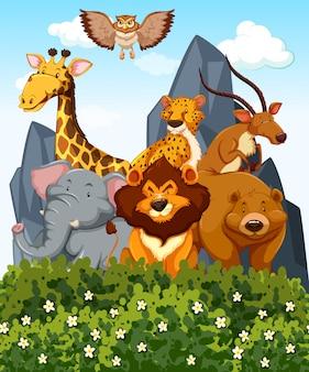 公園内にたくさんの野生動物がいるシーン