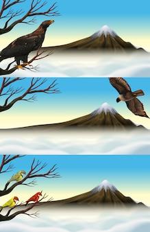 Дикие птицы на ветке