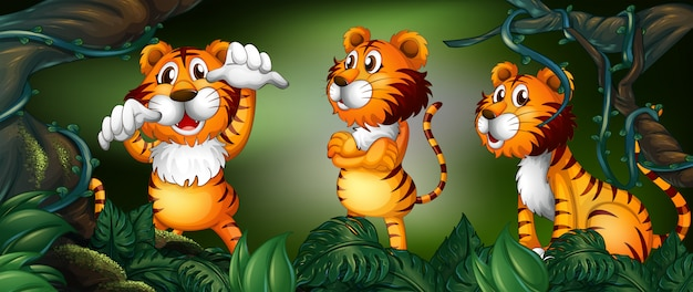 Три тигра в тропическом лесу