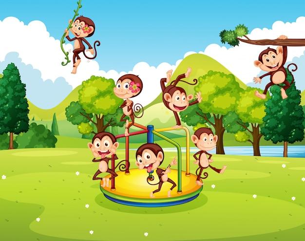 公園で遊んでいる多くのサル