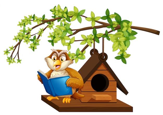 巣箱で本を読んでフクロウ