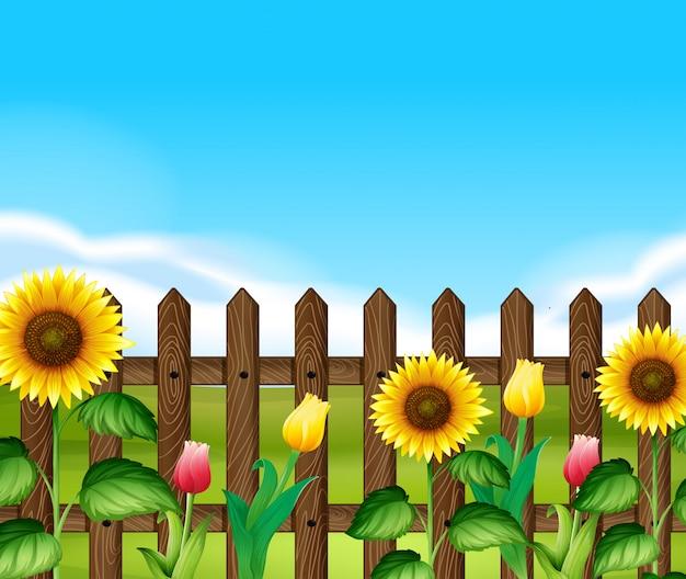 庭の花と木の塀