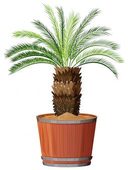 大きな鍋の木