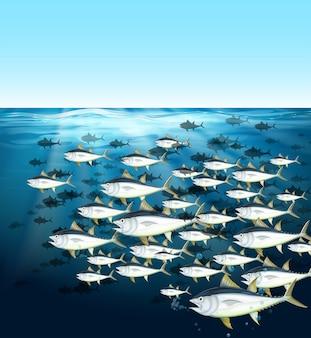 海中を泳ぐマグロの群れ