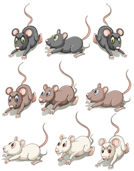 一群のマウス