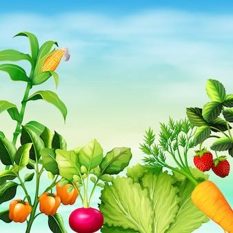 Много видов овощей