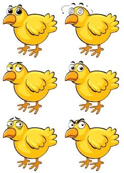 Маленькие птенцы с разными эмоциями