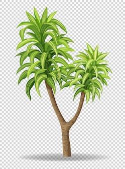 透明の緑の木