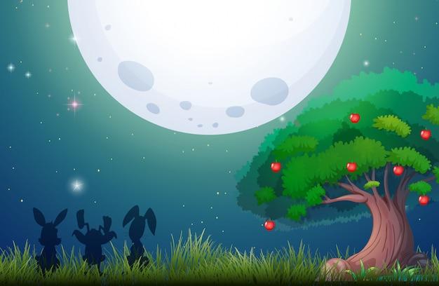満月の夜の自然シーン