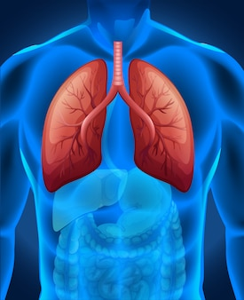 Рак легких у человека