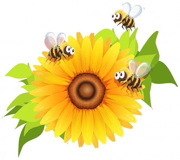 ひまわりの周りを飛んでいる蜂