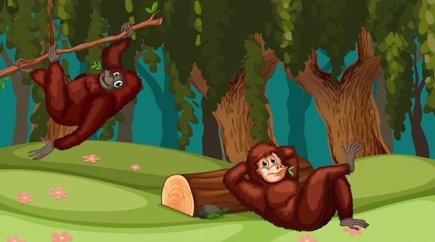 ジャングルのシーンのオランウータン