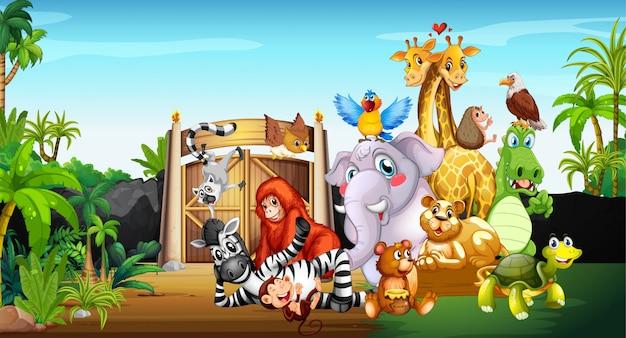 Много милых животных в зоопарке