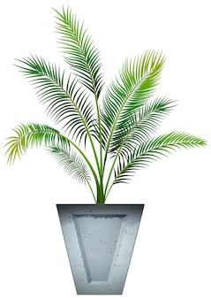 Растение в горшке с почвой изолированы