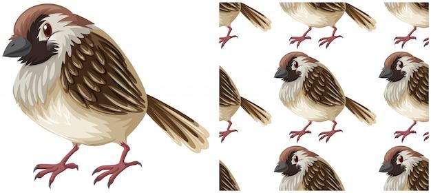 Бесшовный узор птицы на белом