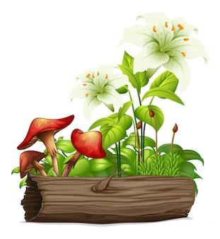 Белая лилия и грибы на белом фоне