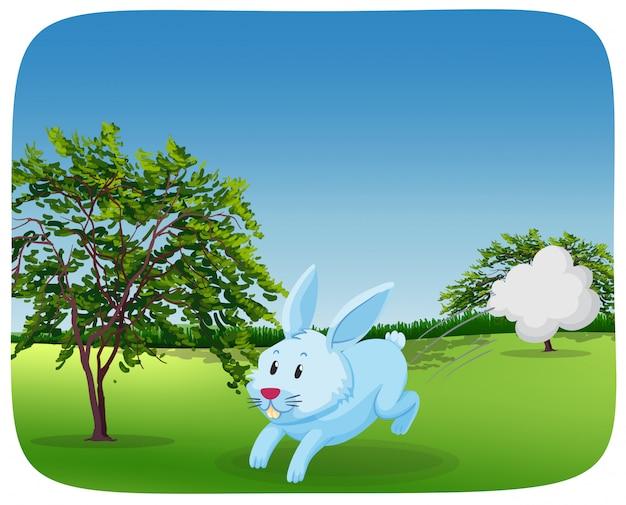 実行中の公園でウサギ