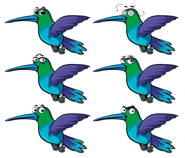 Колибри с разными эмоциями