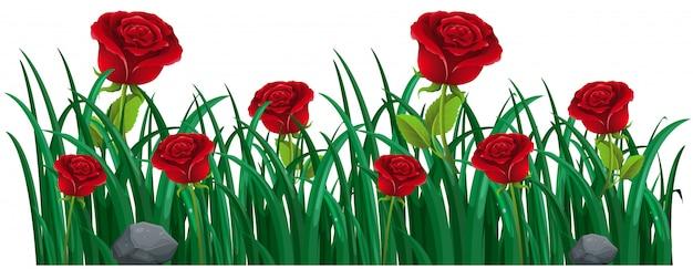 Красные розы в кустах