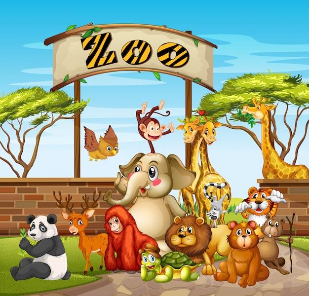 動物園の多くの動物