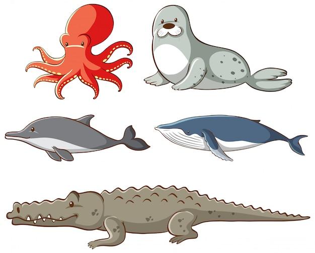 孤立した海の動物