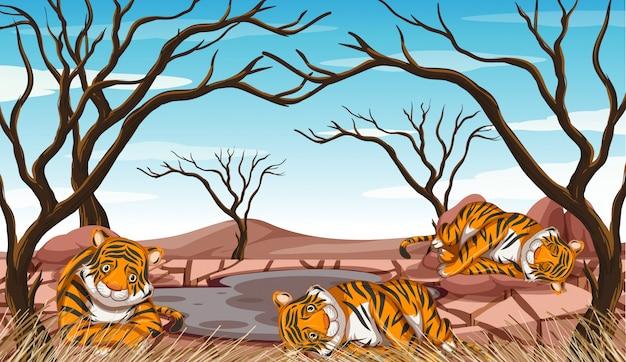 Сцена контроля загрязнения с тиграми и засухой