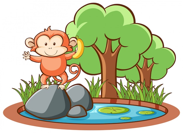 孤立したかわいい猿