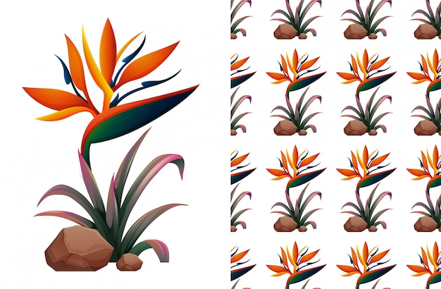 Цветок райской птицы