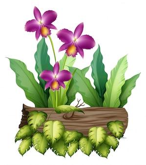Фиолетовые цветки орхидеи и бревно на белом
