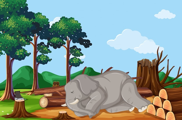 象が死んでいる森林伐採シーン