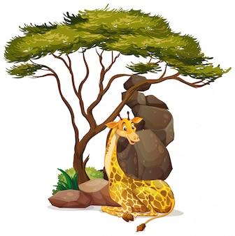 Изолированный жираф под деревом